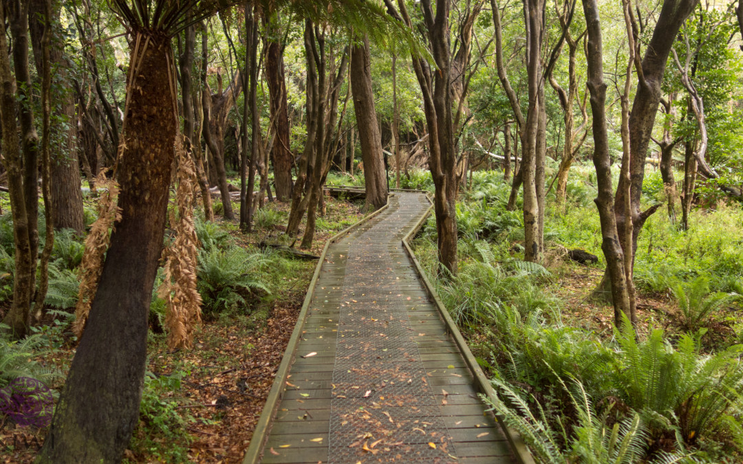 Australia (Victoria): Wilsons Promontory National Park